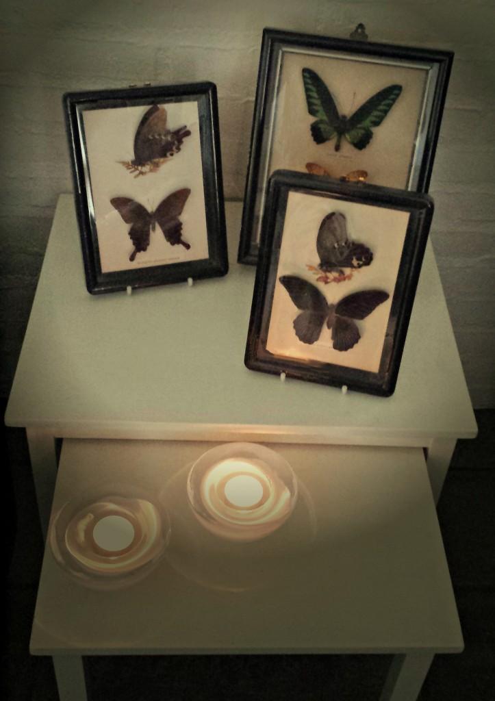 Sommerfugle i glas og ramme