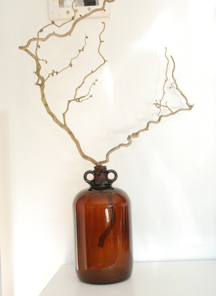 Gammel flaske med troldhasselgrene